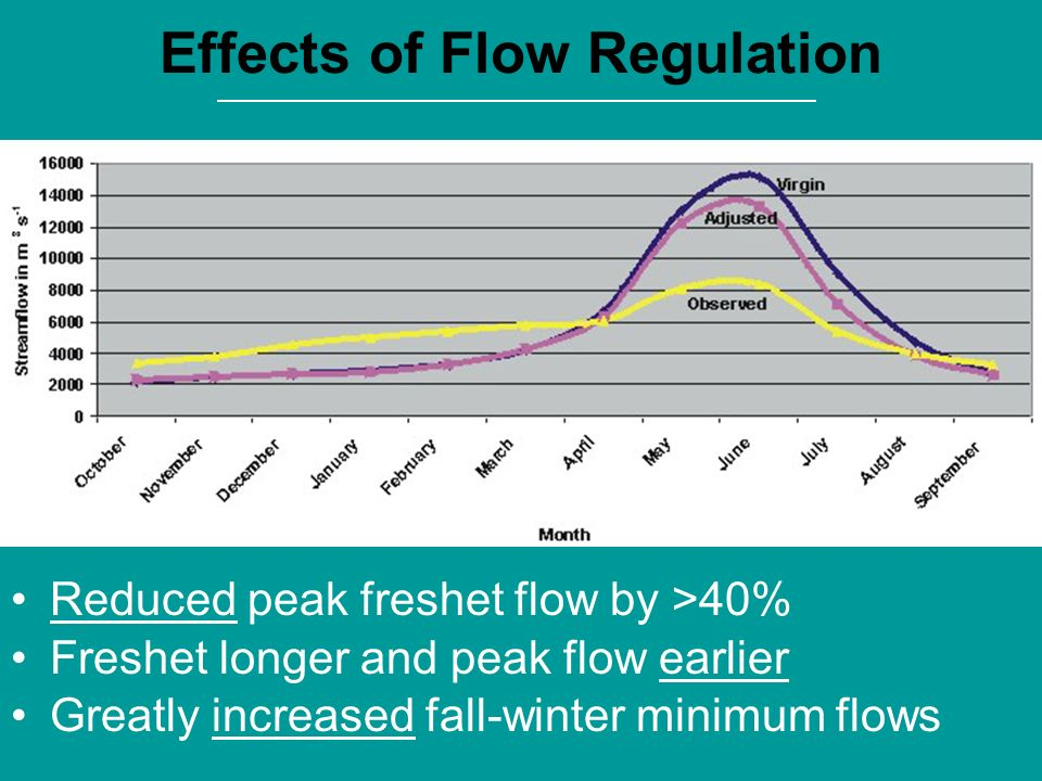 Effects of Flow Regulation Reduced peak freshet flow by >40% Freshet longer and peak flow earlier Greatly increased fall-winter minimum flows 1970-199