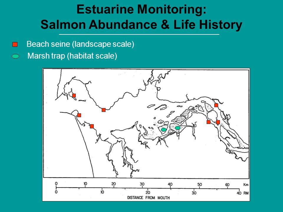 Marsh trap (habitat scale) Beach seine (landscape scale) Estuarine Monitoring: Salmon Abundance & Life History