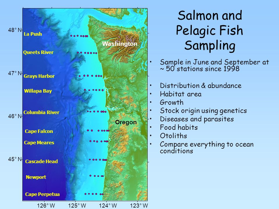 Salmon and Pelagic Fish Sampling Sample in June and September at ~ 50 stations since 1998 Distribution & abundance Habitat area Growth Stock origin using genetics Diseases and parasites Food habits Otoliths Compare everything to ocean conditions