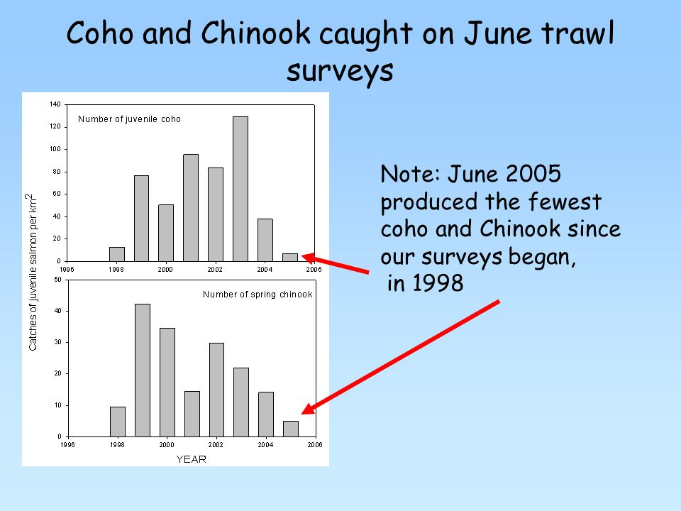 Coho and Chinook caught on June trawl surveys Note: June 2005 produced the fewest coho and Chinook since our surveys began, in 1998