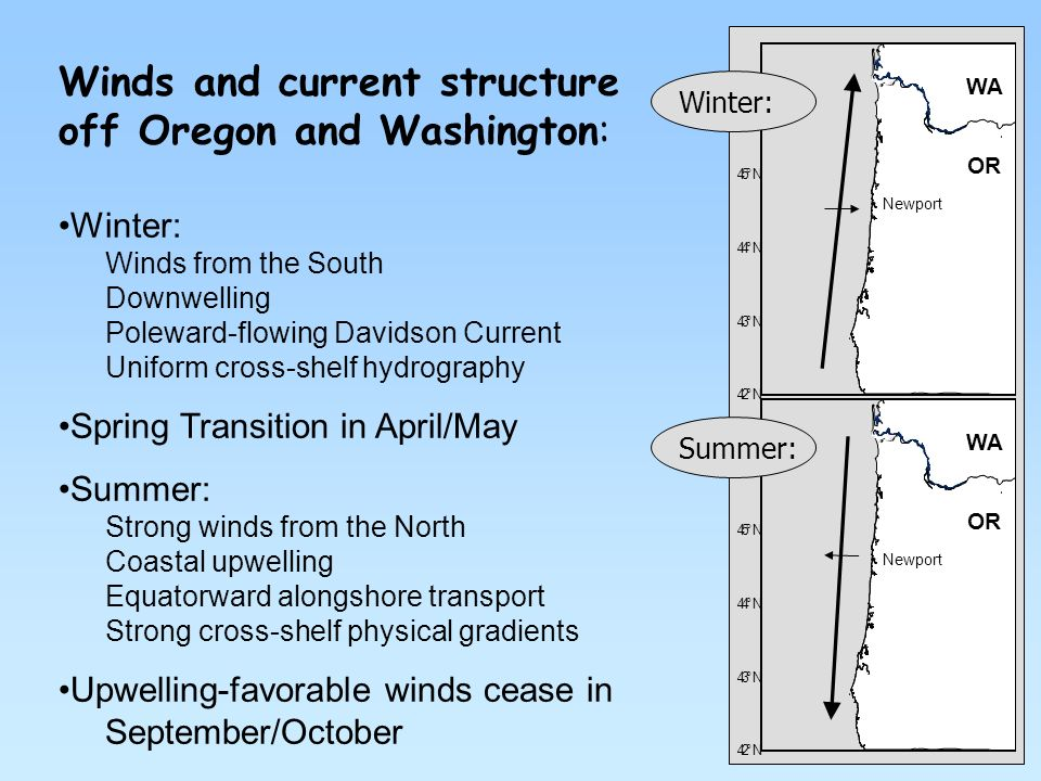 Winds and current structure off Oregon and Washington: Winter: Winds from the South Downwelling Poleward-flowing Davidson Current Uniform cross-shelf hydrography Spring Transition in April/May Summer: Strong winds from the North Coastal upwelling Equatorward alongshore transport Strong cross-shelf physical gradients Upwelling-favorable winds cease in September/October 42° N 43° N 44° N 45° N 46° N Newport WA OR 42° N 43° N 44° N 45° N 46° N Newport WA OR Summer: Winter: