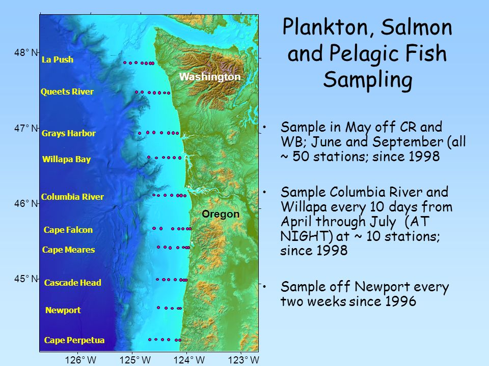Plankton, Salmon and Pelagic Fish Sampling Sample in May off CR and WB; June and September (all ~ 50 stations; since 1998 Sample Columbia River and Willapa every 10 days from April through July (AT NIGHT) at ~ 10 stations; since 1998 Sample off Newport every two weeks since 1996