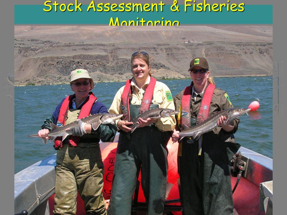 Stock Assessment & Fisheries Monitoring Total Length Year 24-3636-4848-6060-7272+ Sum Bonneville Reservoir 199982,40041,8003,200600400128,400 200384,5