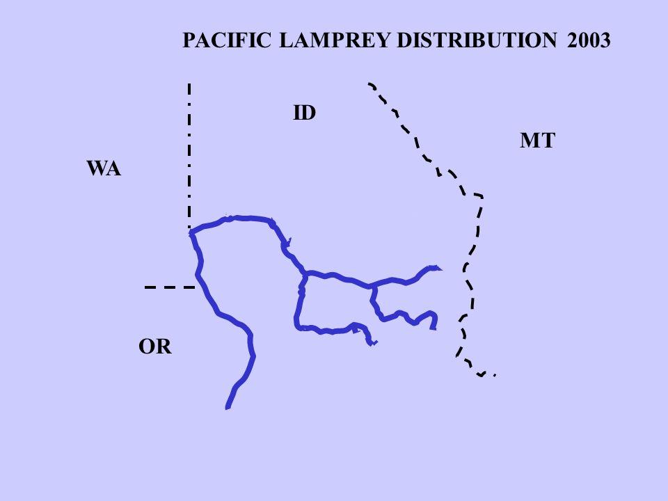 WA ID MT OR PACIFIC LAMPREY DISTRIBUTION 1970 PACIFIC LAMPREY DISTRIBUTION 1980 PACIFIC LAMPREY DISTRIBUTION 2003