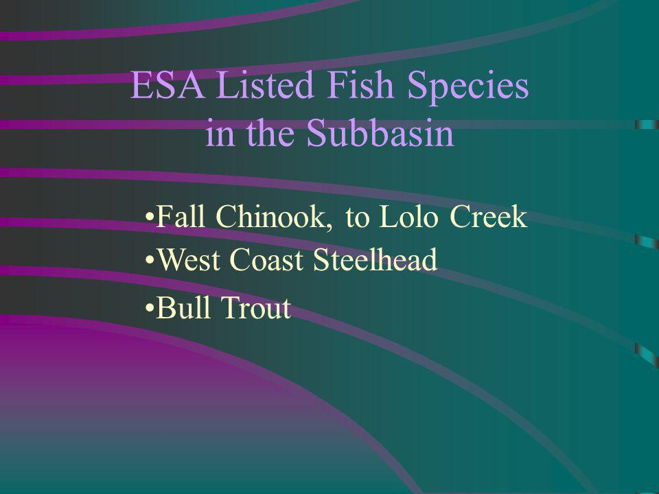 ESA Listed Fish Species in the Subbasin Fall Chinook, to Lolo Creek West Coast Steelhead Bull Trout