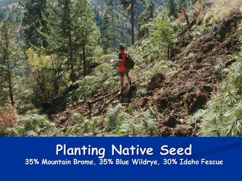 Planting Native Seed 35% Mountain Brome, 35% Blue Wildrye, 30% Idaho Fescue