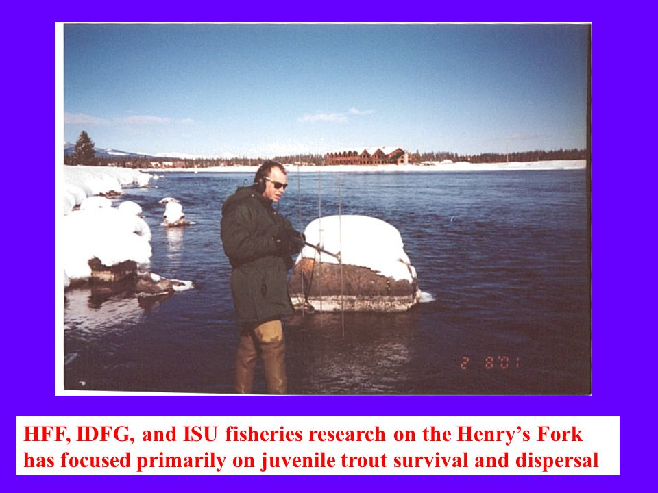 HFF, IDFG, and ISU fisheries research on the Henrys Fork has focused primarily on juvenile trout survival and dispersal