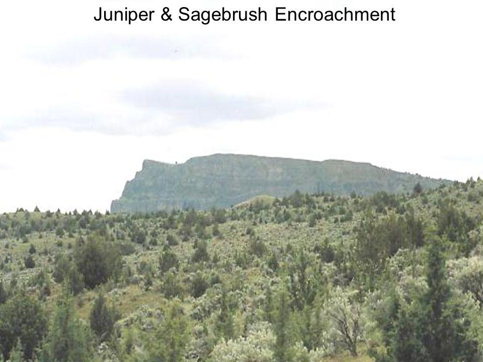Juniper & Sagebrush Encroachment