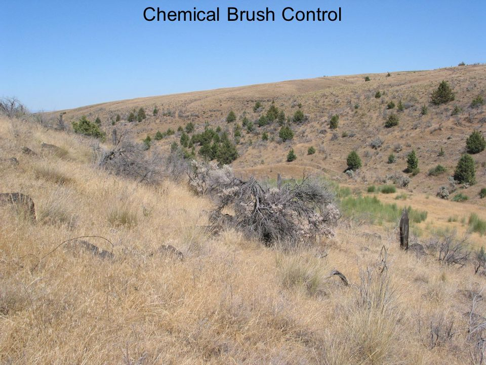 Chemical Brush Control