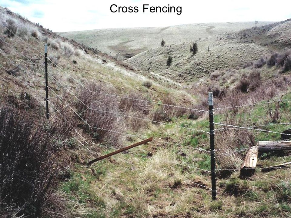 Cross Fencing