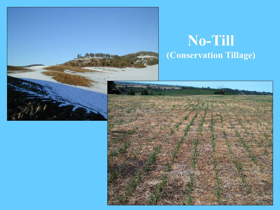 No-Till (Conservation Tillage)