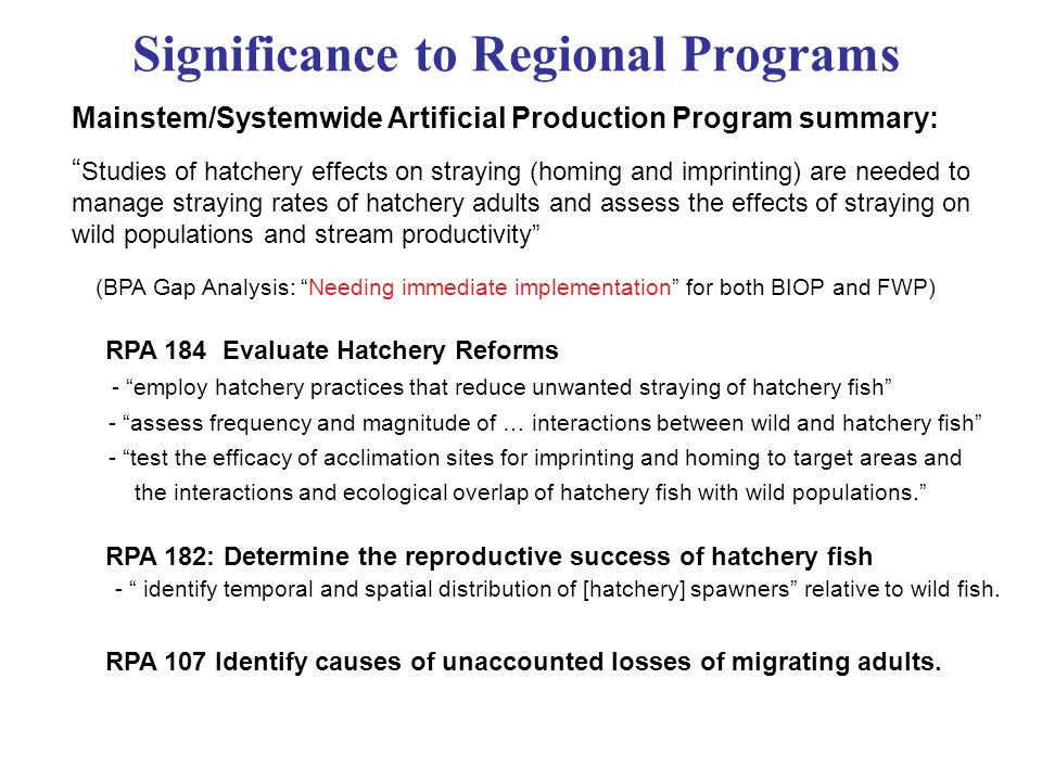 Significance to Regional Programs Mainstem/Systemwide Artificial Production Program summary: Studies of hatchery effects on straying (homing and imprinting) are needed to manage straying rates of hatchery adults and assess the effects of straying on wild populations and stream productivity (BPA Gap Analysis: Needing immediate implementation for both BIOP and FWP) RPA 184 Evaluate Hatchery Reforms - employ hatchery practices that reduce unwanted straying of hatchery fish - assess frequency and magnitude of … interactions between wild and hatchery fish - test the efficacy of acclimation sites for imprinting and homing to target areas and the interactions and ecological overlap of hatchery fish with wild populations.