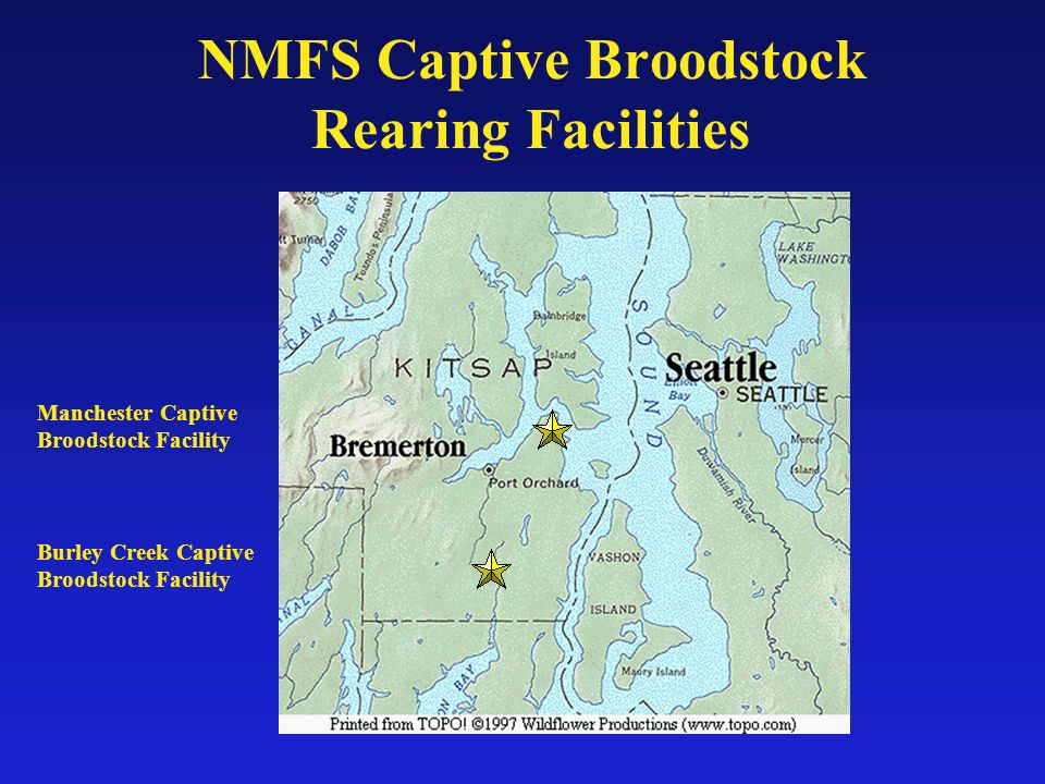 NMFS Captive Broodstock Rearing Facilities Burley Creek Captive Broodstock Facility Manchester Captive Broodstock Facility