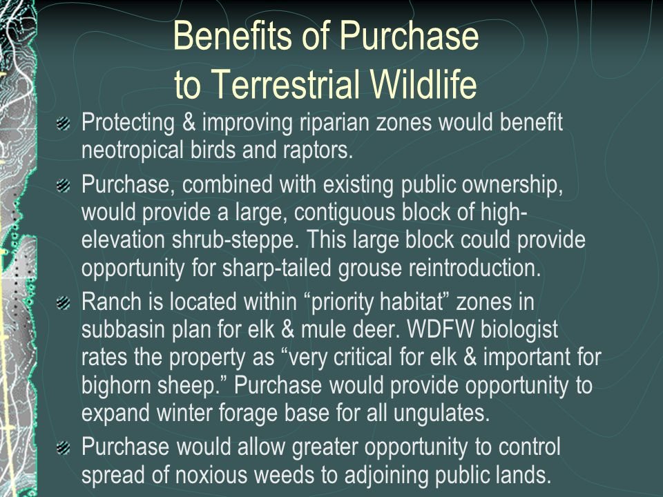 Benefits of Purchase to Terrestrial Wildlife Protecting & improving riparian zones would benefit neotropical birds and raptors. Purchase, combined wit