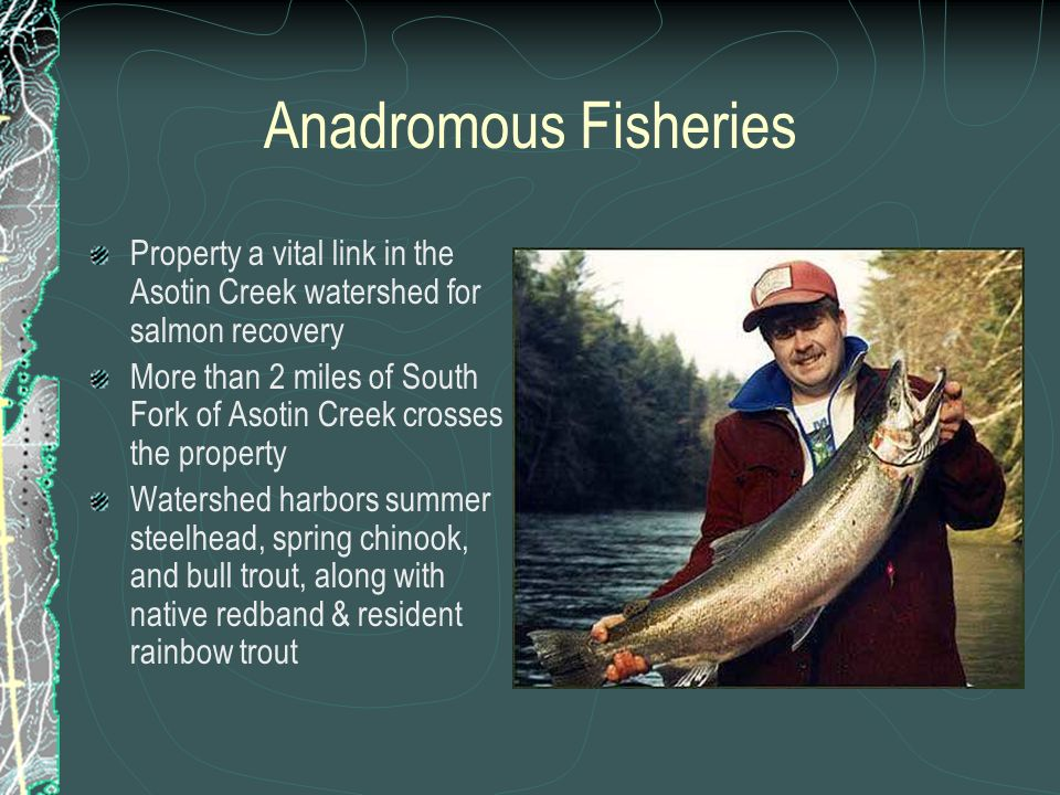 Anadromous Fisheries Property a vital link in the Asotin Creek watershed for salmon recovery More than 2 miles of South Fork of Asotin Creek crosses t
