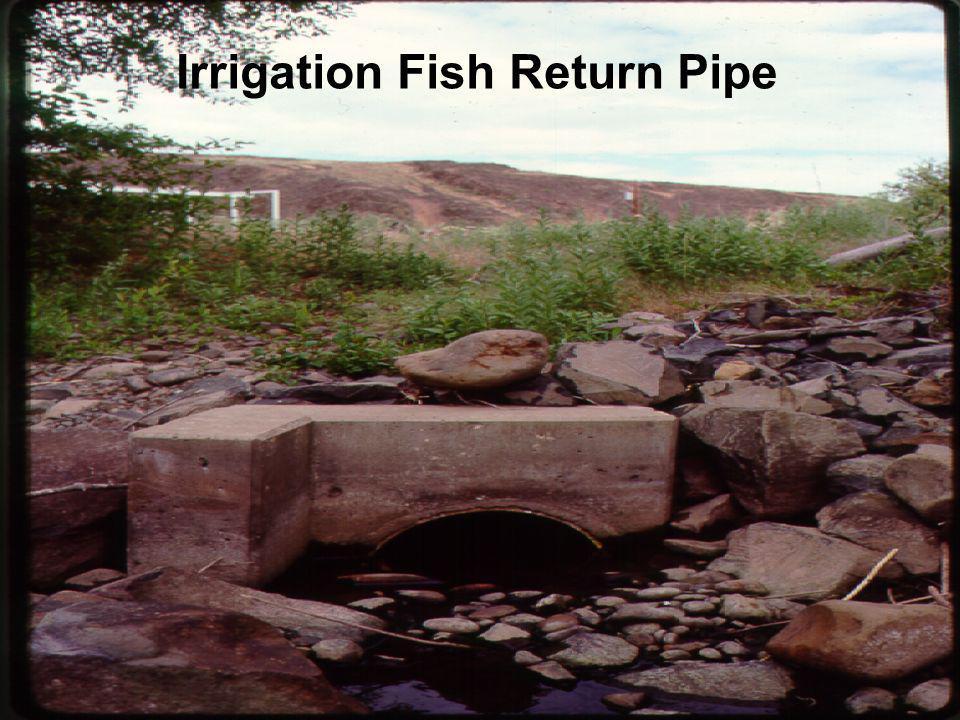 Irrigation Fish Return Pipe
