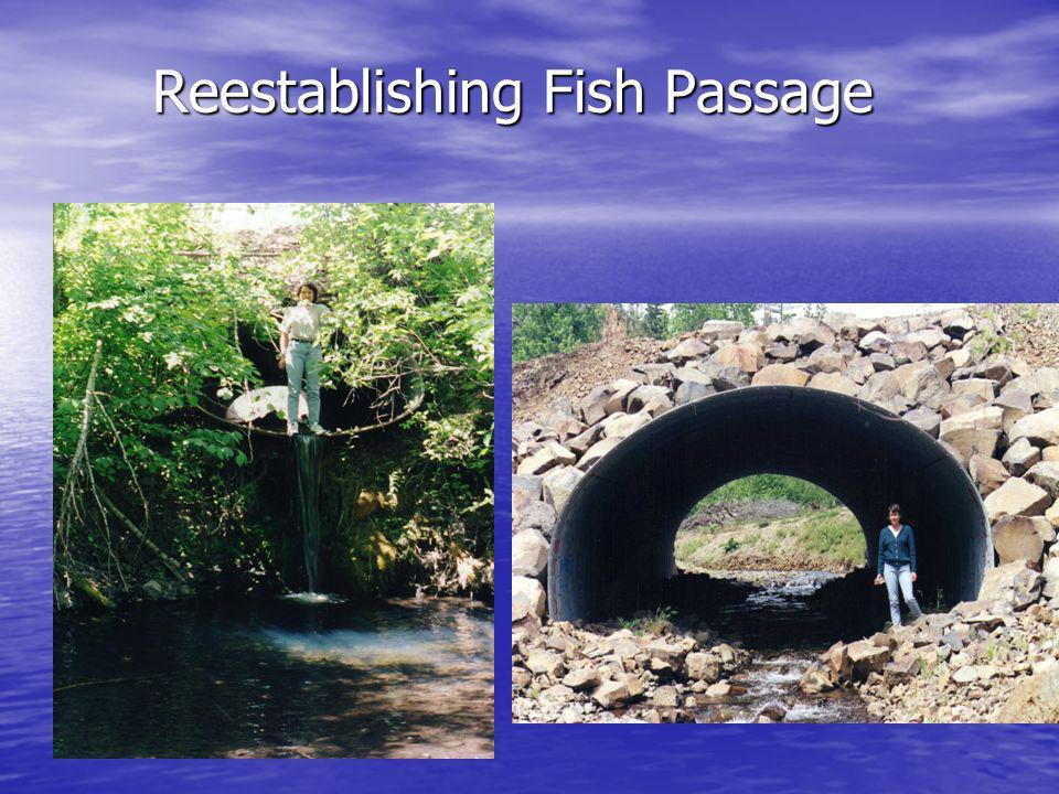 Reestablishing Fish Passage