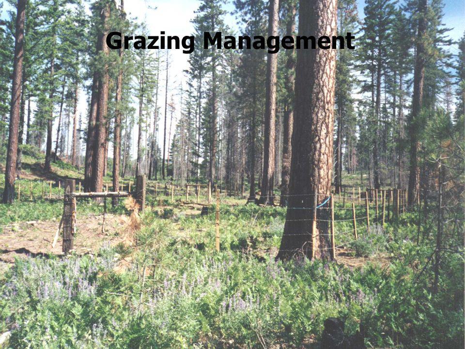 Grazing Management