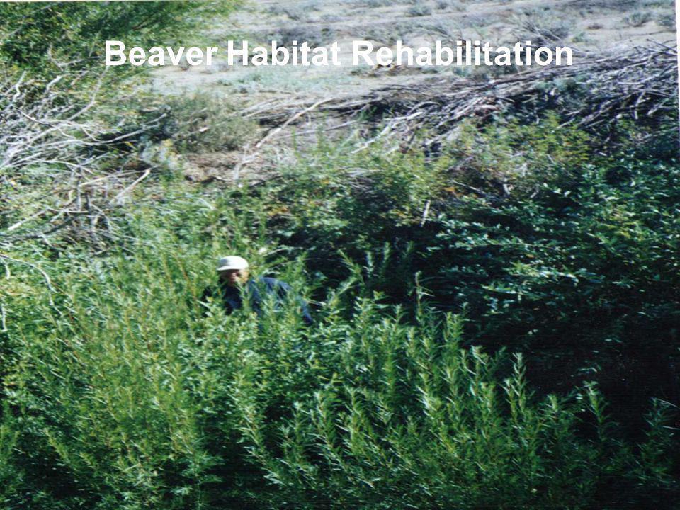 Beaver Habitat Rehabilitation