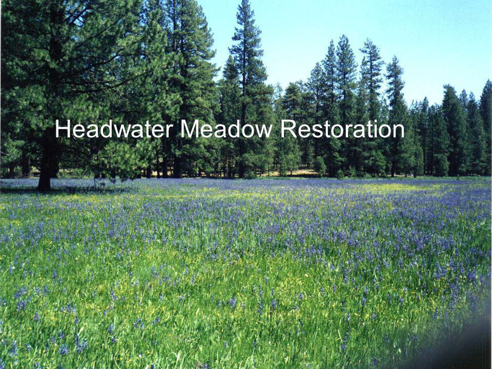 Headwater Meadow Restoration