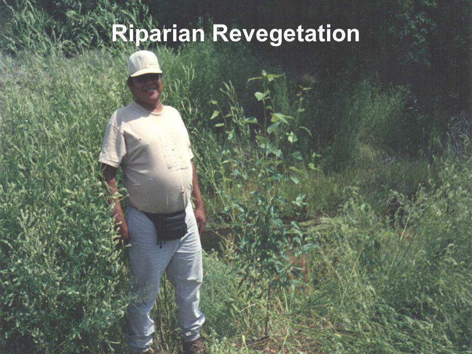 Riparian Revegetation