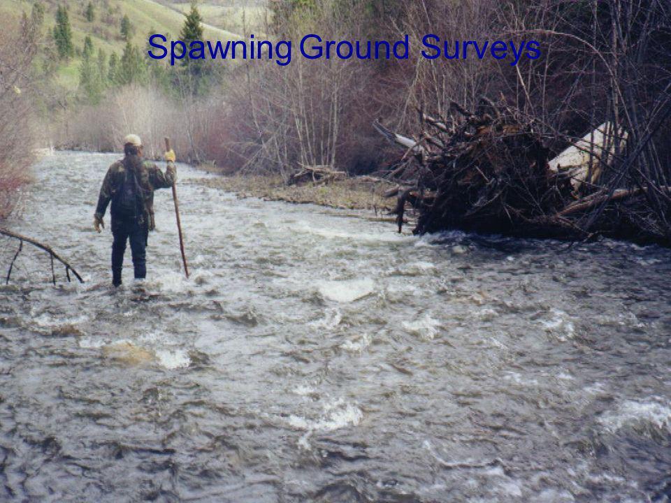 Spawning Ground Surveys