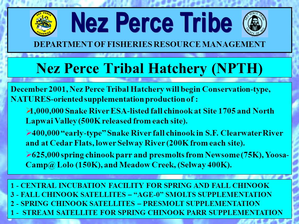 Nez Perce Tribal Hatchery (NPTH) DEPARTMENT OF FISHERIES RESOURCE MANAGEMENT 1 - CENTRAL INCUBATION FACILITY FOR SPRING AND FALL CHINOOK 3 - FALL CHINOOK SATELLITES – AGE-0 SMOLTS SUPPLEMENTATION 2 - SPRING CHINOOK SATELLITES – PRESMOLT SUPPLEMENTATION 1 - STREAM SATELLITE FOR SPRING CHINOOK PARR SUPPLEMENTATION December 2001, Nez Perce Tribal Hatchery will begin Conservation-type, NATURES-oriented supplementation production of : 1,000,000 Snake River ESA-listed fall chinook at Site 1705 and North Lapwai Valley (500K released from each site).