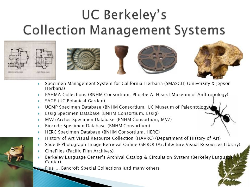 Campus supports a broad range of collections, from Art to Zoology, but … Too many aging legacy systems Millions of objects, artifacts, specimens Managed in about 20 different collection management systems Running on about 15 hardware platforms Maintained by about 10 different technology groups, with various degrees of technical experience Inconsistent decision-making Insufficient and inadequate funding models in a time when university funding is challenged Does this sound familiar?
