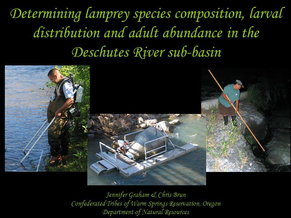 Determining lamprey species composition, larval distribution and adult abundance in the Deschutes River sub-basin Jennifer Graham & Chris Brun Confede