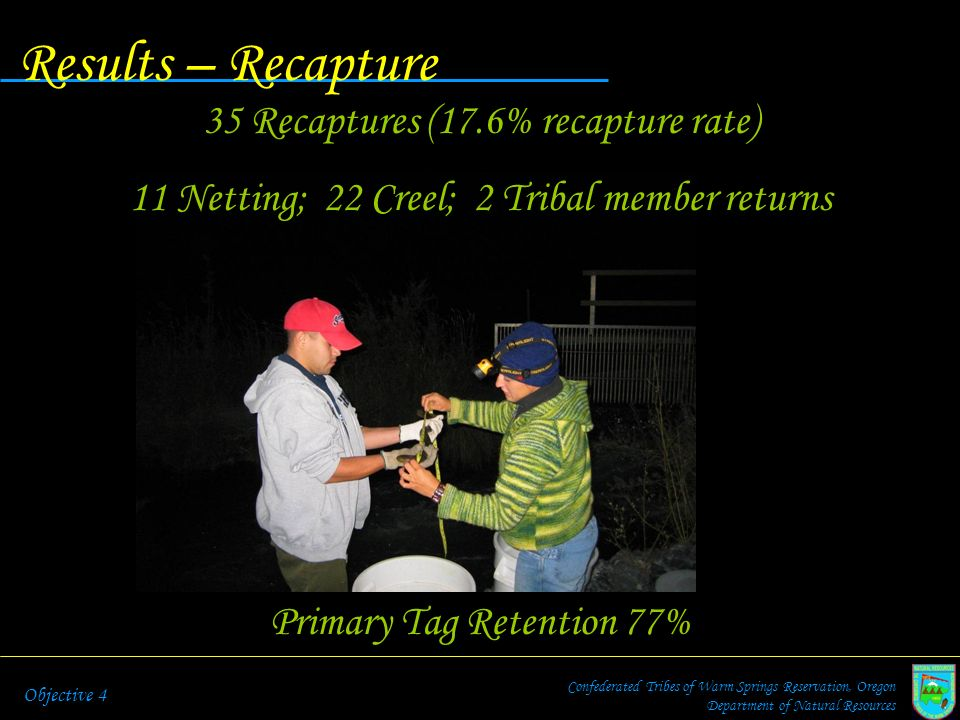 Results – Recapture Confederated Tribes of Warm Springs Reservation, Oregon Department of Natural Resources Objective 4 Primary Tag Retention 77% 35 R