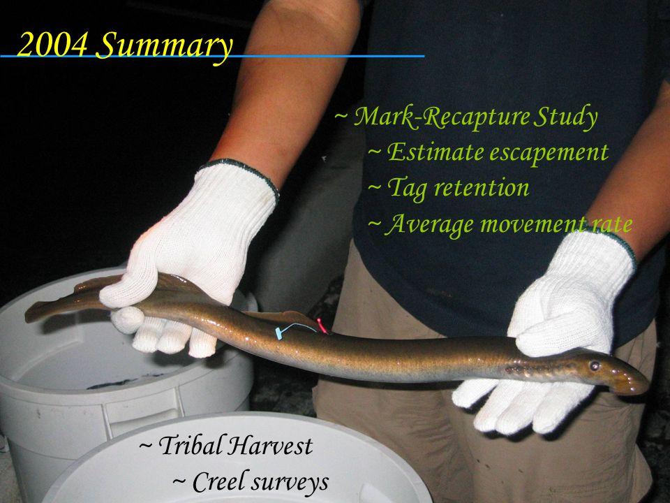 ~ Tribal Harvest ~ Creel surveys ~ Mark-Recapture Study ~ Estimate escapement ~ Tag retention ~ Average movement rate 2004 Summary