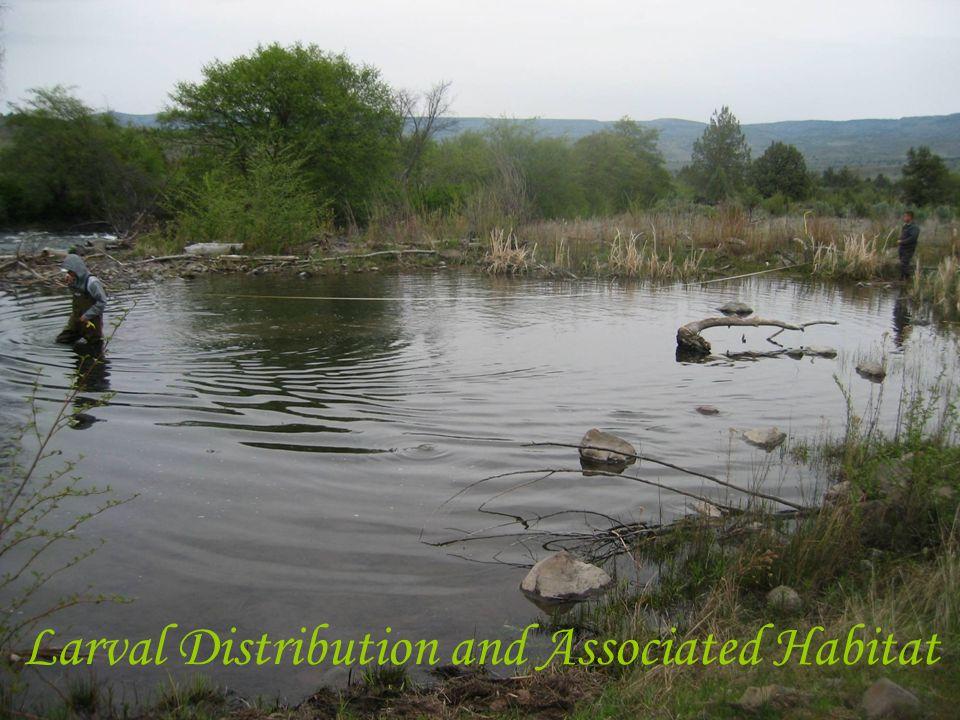 Larval Distribution and Associated Habitat