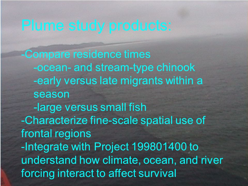 Plume study products: -Compare residence times -ocean- and stream-type chinook -early versus late migrants within a season -large versus small fish -C