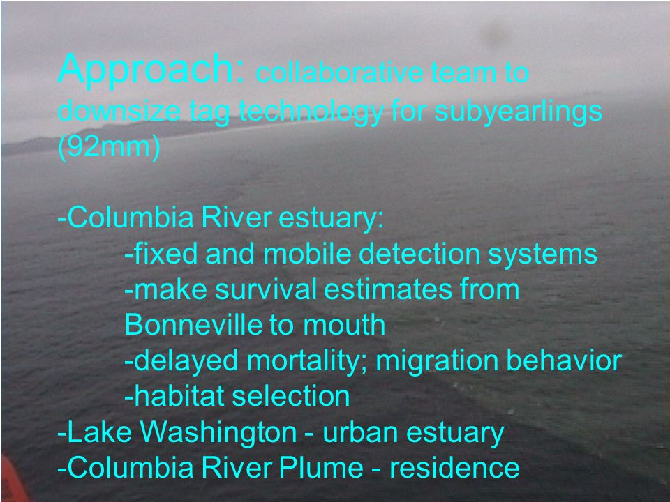 Approach: collaborative team to downsize tag technology for subyearlings (92mm) -Columbia River estuary: -fixed and mobile detection systems -make sur