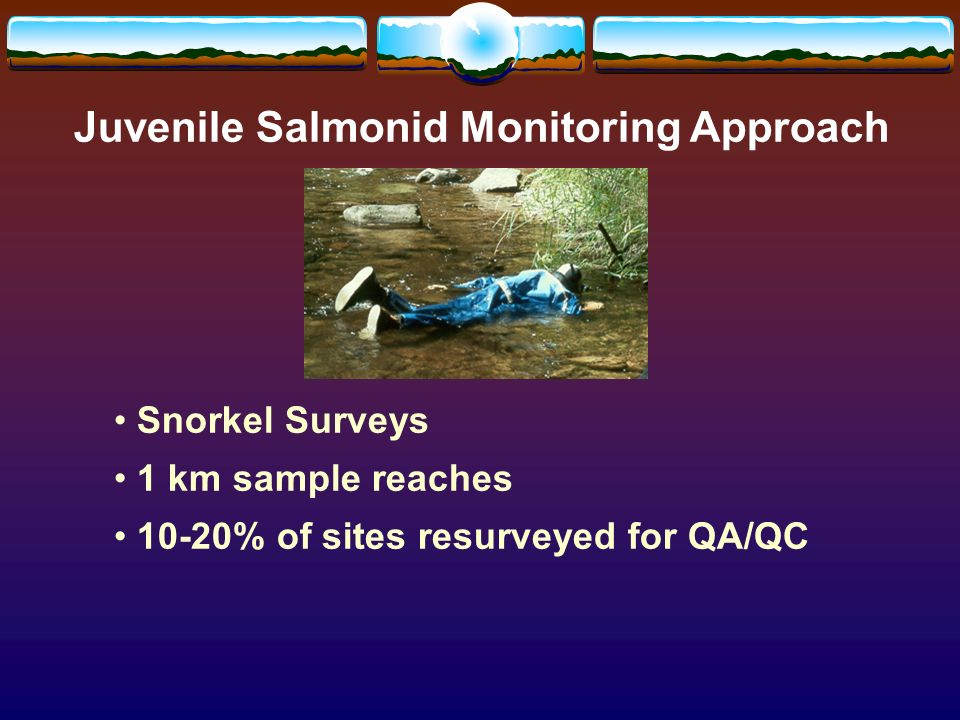 Juvenile Salmonid Monitoring Approach Snorkel Surveys 1 km sample reaches 10-20% of sites resurveyed for QA/QC