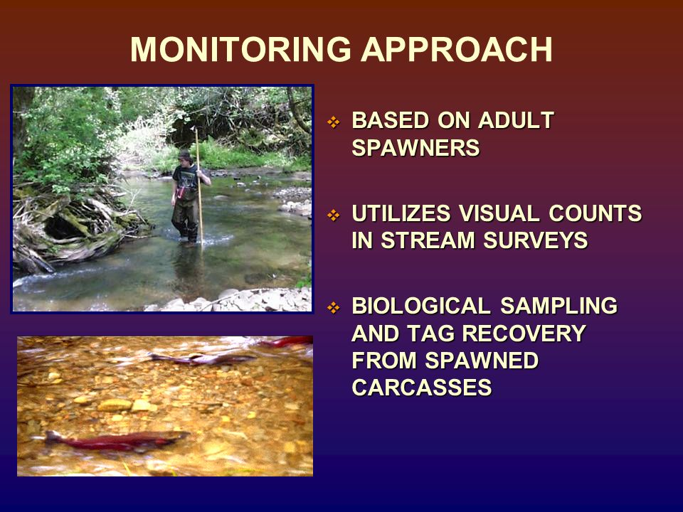 MONITORING APPROACH BASED ON ADULT SPAWNERS BASED ON ADULT SPAWNERS UTILIZES VISUAL COUNTS IN STREAM SURVEYS UTILIZES VISUAL COUNTS IN STREAM SURVEYS BIOLOGICAL SAMPLING AND TAG RECOVERY FROM SPAWNED CARCASSES BIOLOGICAL SAMPLING AND TAG RECOVERY FROM SPAWNED CARCASSES