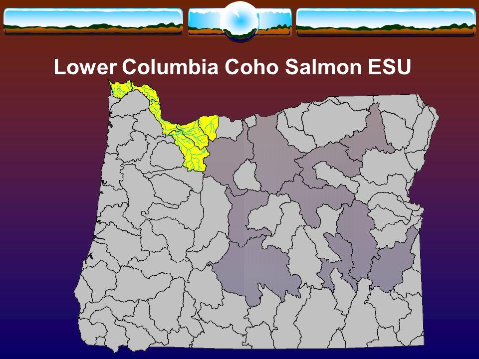 Lower Columbia Coho Salmon ESU