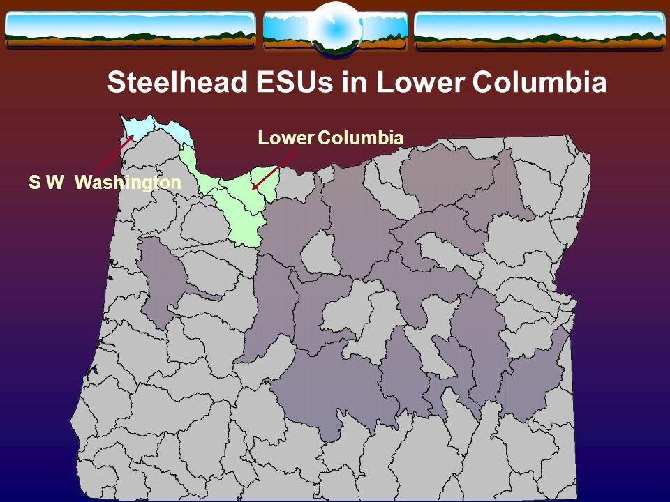 Steelhead ESUs in Lower Columbia S W Washington Lower Columbia