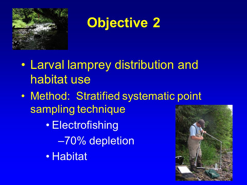 Objective 2 Larval lamprey distribution and habitat use Method: Stratified systematic point sampling technique Electrofishing –70% depletion Habitat