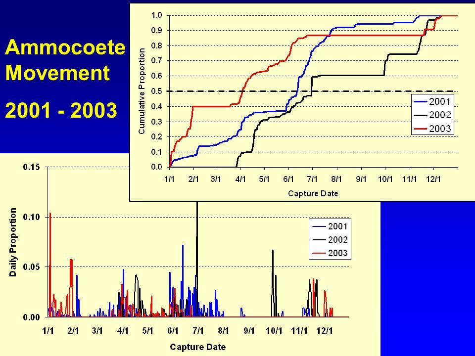 Ammocoete Movement 2001 - 2003