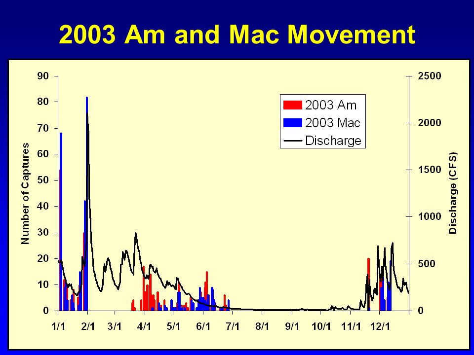 2003 Am and Mac Movement