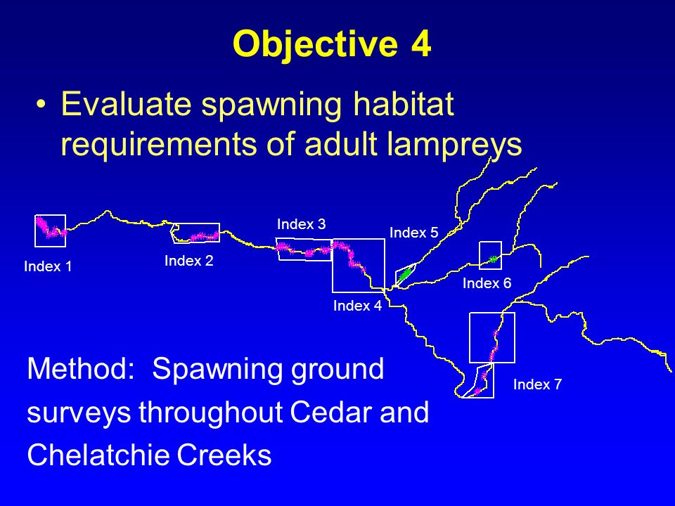 Index 1 Index 2 Index 3 Index 4 Index 5 Index 6 Index 7 Objective 4 Evaluate spawning habitat requirements of adult lampreys Method: Spawning ground s