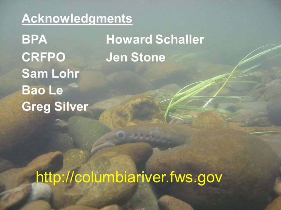 http://columbiariver.fws.gov Acknowledgments BPA Howard Schaller CRFPOJen Stone Sam Lohr Bao Le Greg Silver