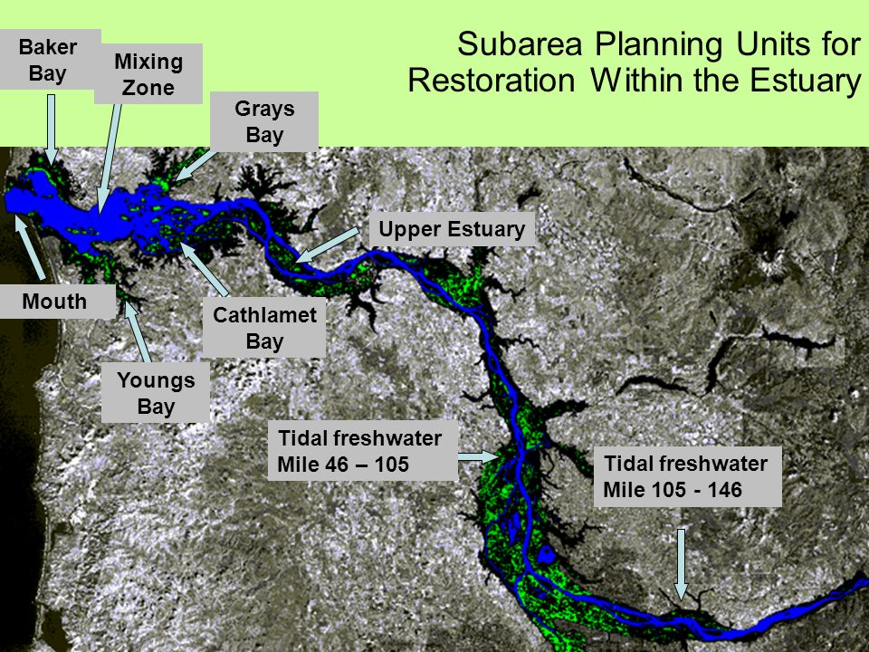 Subarea Planning Units for Restoration Within the Estuary Tidal freshwater Mile 105 - 146 Tidal freshwater Mile 46 – 105 Upper Estuary Youngs Bay Mouth Baker Bay Grays Bay Cathlamet Bay Mixing Zone