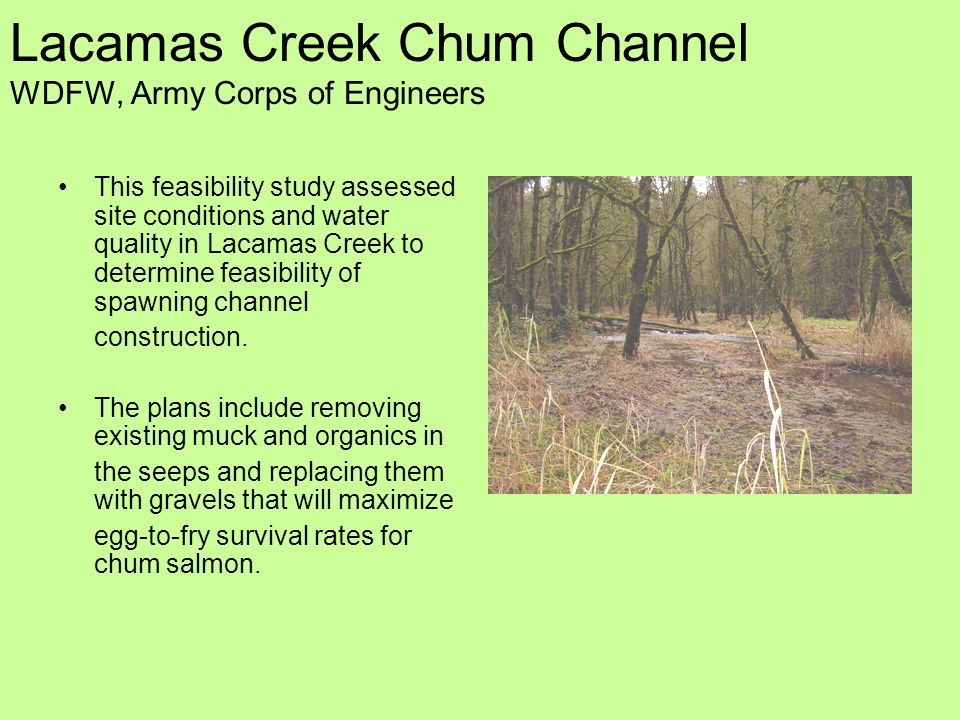 Lacamas Creek Chum Channel WDFW, Army Corps of Engineers This feasibility study assessed site conditions and water quality in Lacamas Creek to determine feasibility of spawning channel construction.