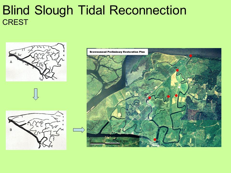 Blind Slough Tidal Reconnection CREST