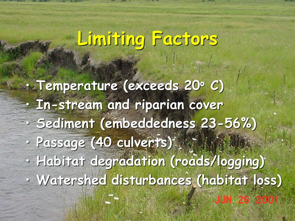 Limiting Factors Temperature (exceeds 20 o C)Temperature (exceeds 20 o C) In-stream and riparian coverIn-stream and riparian cover Sediment (embeddedness 23-56%)Sediment (embeddedness 23-56%) Passage (40 culverts)Passage (40 culverts) Habitat degradation (roads/logging)Habitat degradation (roads/logging) Watershed disturbances (habitat loss)Watershed disturbances (habitat loss)