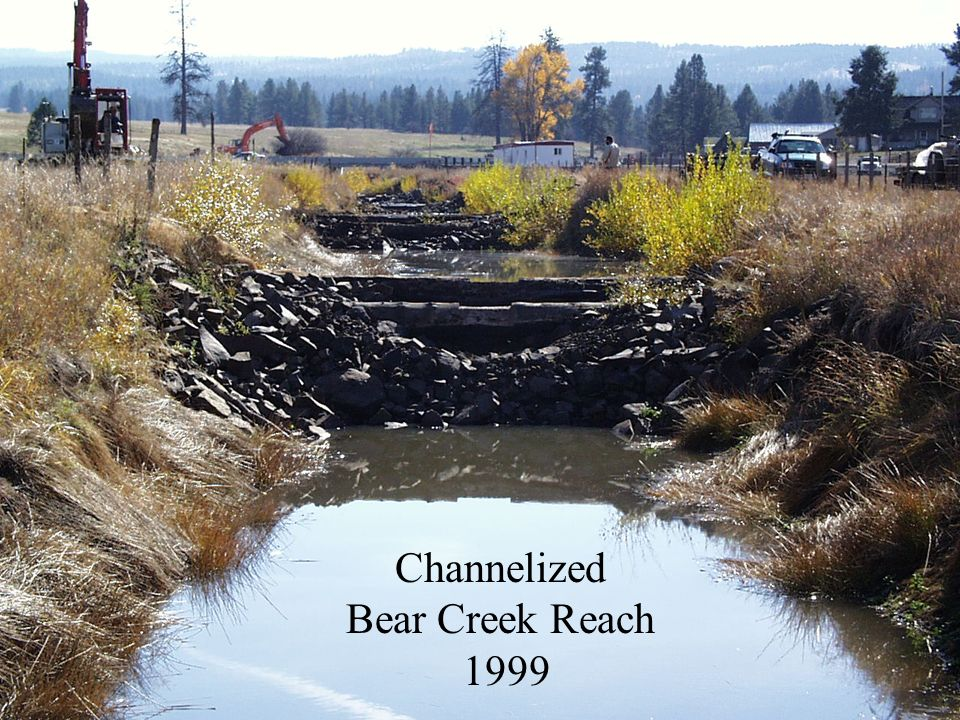 Channelized Bear Creek Reach 1999