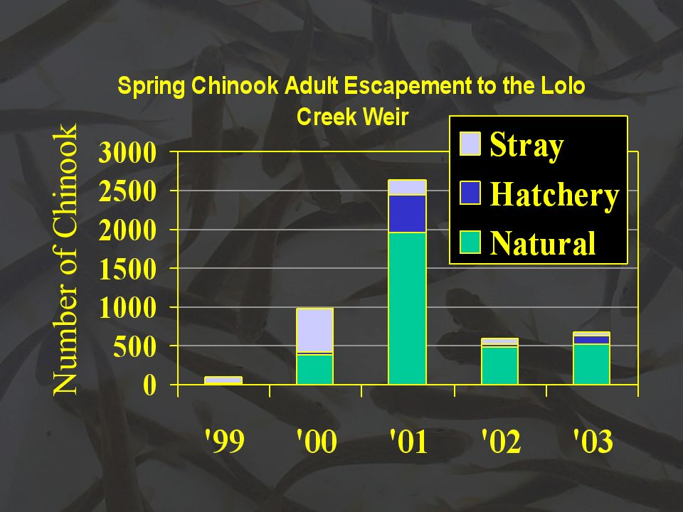 Number of Chinook