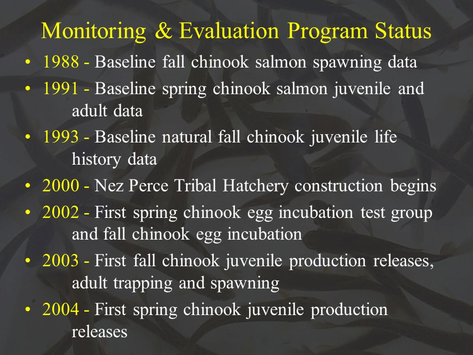 Monitoring & Evaluation Program Status Baseline fall chinook salmon spawning data Baseline spring chinook salmon juvenile and adult data Baseline natural fall chinook juvenile life history data Nez Perce Tribal Hatchery construction begins First spring chinook egg incubation test group and fall chinook egg incubation First fall chinook juvenile production releases, adult trapping and spawning First spring chinook juvenile production releases